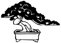 Bonsai Bäume